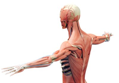 Read more about Find out about the Community Musculoskeletal Service